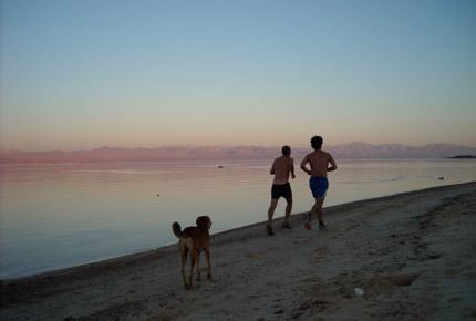 al tarek camp jogging